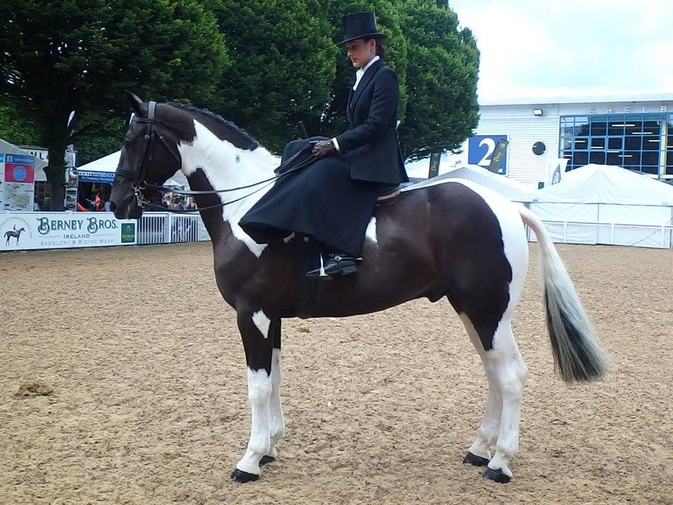 Irish Horses for Sale – Horses in Ireland